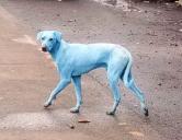 Din cauza poluării, câinii din Mumbai au devenit, peste noapte… albaștri! (VIDEO)