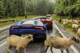 Lamborghini şi-a filmat ultimul clip publicitar printre oi şi căruţe, pe Transfăgărăşan (FOTO/VIDEO)