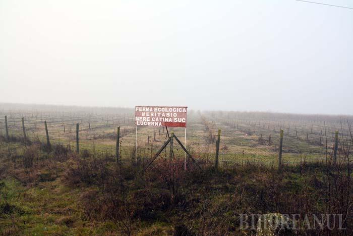 Beline de Bihor: Sute de bihoreni s-au privatizat ilegal pe cursurile de apă din judeţ (FOTO)
