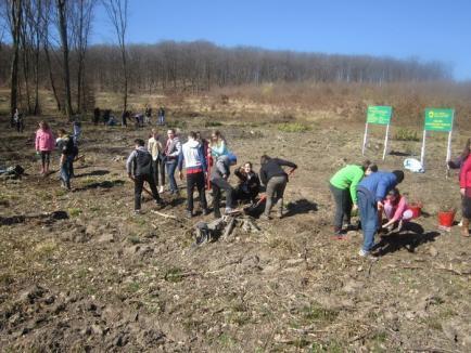 Cu ochi albaştri şi sânge 'verde': Angajaţi ai SRI Bihor au plantat copaci la Remeţi (FOTO)