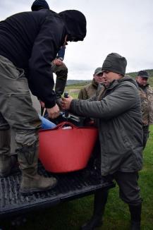 'Operaţiunea Ştiuca': 16.000 puieţi de ştiucă au fost lansaţi în apele din Bihor, inclusiv în Oradea (FOTO)