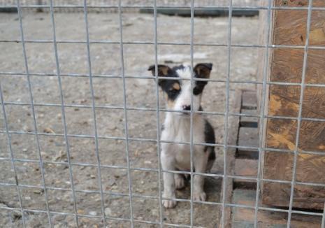 ADP pune la dispoziție transport gratuit pentru cei care adoptă câini fără stăpân la domiciliu