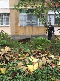 Tânărul găsit mort în Oradea a fost ucis! Poliţia caută criminalul (FOTO)