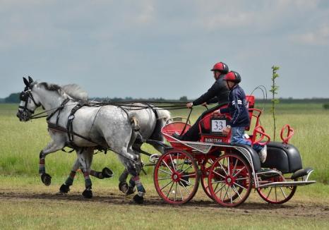 Cefa găzduieşte în weekend Campionatului Internaţional de Atelaje cu doi şi patru cai