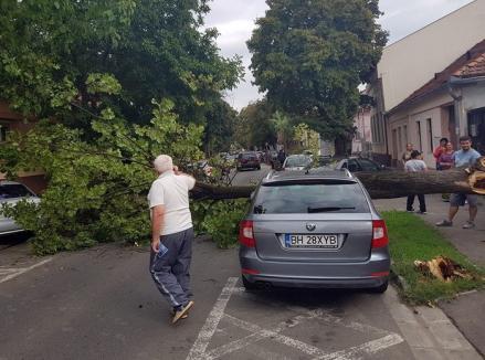 Putea face victime! Un copac prăbuşit a distrus o maşină parcată pe strada Iuliu Maniu (FOTO)