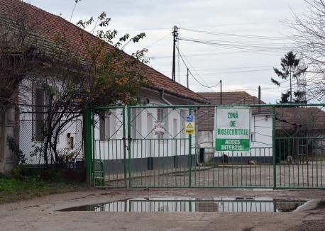 Fermă fără porci: Nutripork încă nu a explicat cum va opri duhoarea din Oradea