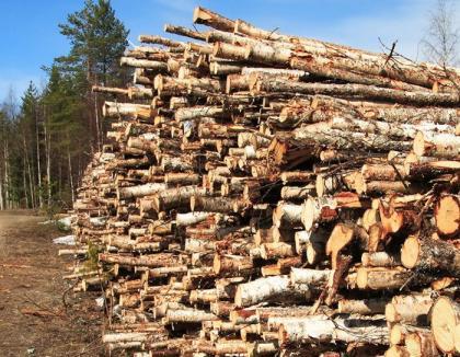 Patronii unei firme din Roşia, prinşi că au vândut peste 50 de metri cubi de lemne de foc fără acte