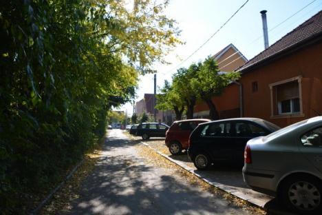A vrut, dar n-a putut! Primăria Oradea a încercat să taie mai mulţi copaci de lângă Liceul German, dar a oprit-o APM Bihor (FOTO)