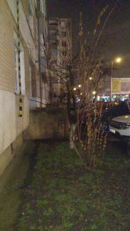 Ucigaşul a fost găsit! Adrian Hladii a fost depistat de Poliţie în cartierul Nufărul. Interlopul s-a aruncat de la etajul 4 şi şi-a pierdut viaţa (VIDEO)