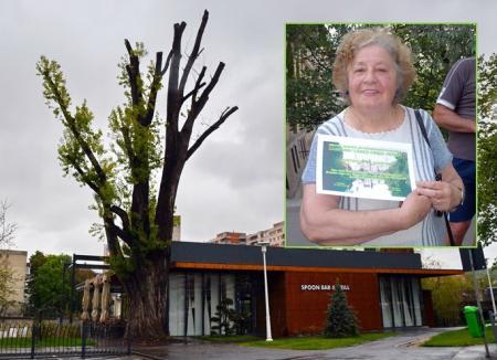Ecologiştii, supăraţi pe Primărie: Plopul mutilat lângă restaurantul Spoon fusese adoptat de biologul Anna Marossy (FOTO)