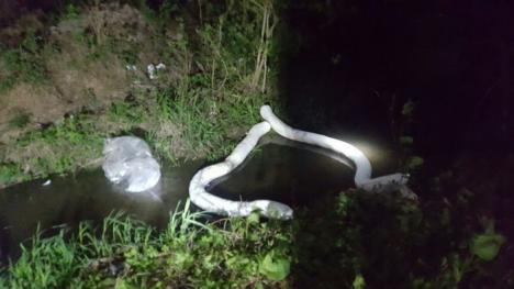 Borhot în apă: Fabrica de băuturi a fraţilor Micula a provocat o poluare pe un afluent al Crişului Negru