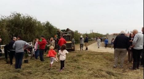 Peste 100 de voluntari, majoritatea localnici în Sîntandrei, au plantat o perdea verde în jurul unei ferme de vaci (FOTO)