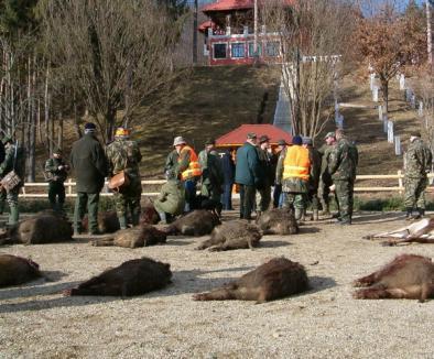 Primarul din Monte Carlo împuşcă mistreţi în Bihor
