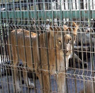 Grădina Zoologică - 'salvată' de Guvern prin evacuare, acuză deputatul Lucia Varga