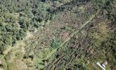 Dezastru în pădure: Bihorul, judeţul cu cele mai multe hectare de păduri distruse de vântul puternic (FOTO/VIDEO)