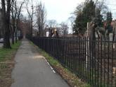 Masacrul din Parcul Bălcescu, comandat de Primărie! Sesizat de BIHOREANUL, viceprimarul Birta a suspendat tăierile de arbori