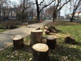 Defrişări masive în Parcul Bălcescu din Oradea. Mai mulţi copaci au fost tăiaţi sau ciopârţiţi (FOTO)