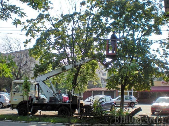 Licitaţiile pentru arbori şi bănci, adjudecate