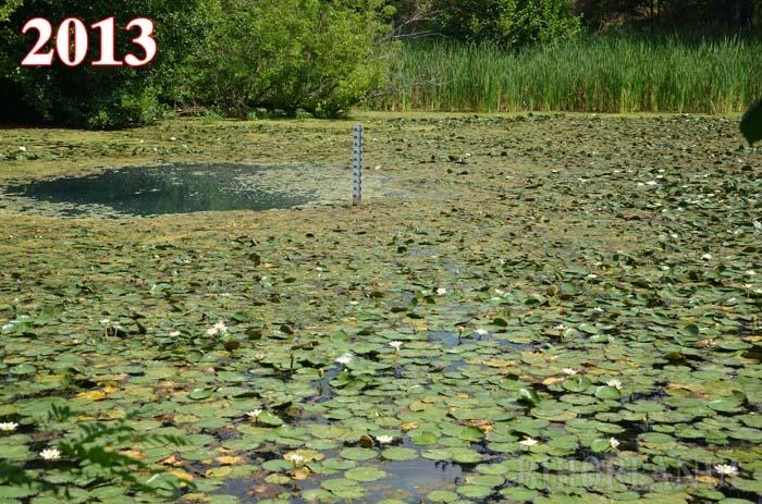 BUCURIE SCURTĂ. Anul trecut, în iulie, Muzeul Ţării Crişurilor anunţa că, deşi cu trei luni întârziere, lotuşii au înflorit din nou pe lacul din 1 Mai. Naturaliştii se şi tem, însă, să se gândească că 2013 a fost ultimul an în care nuferii au colorat luciul apei