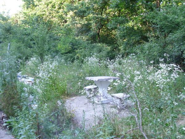 Popasurile din pădure, pline de gunoaie (FOTO)