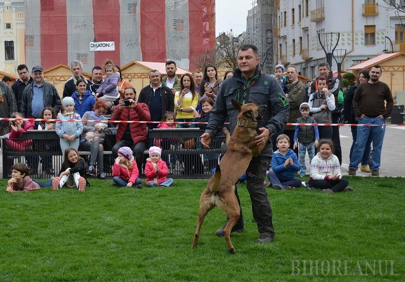 Campionat internaţional de câini ciobăneşti belgieni şi olandezi, la Oradea