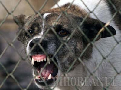 Muşcat de cap şi gât de câinele vecinilor