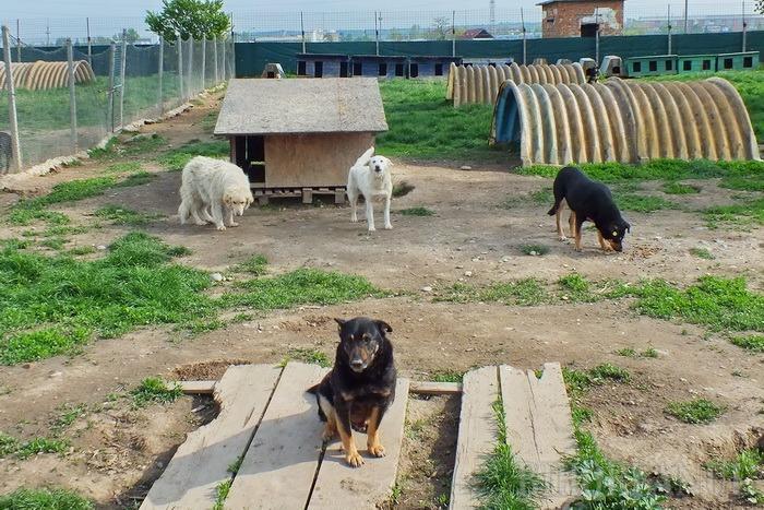 Iubitorii de câini, disperaţi: Au început eutanasierile în Adăpostul Grivei!
