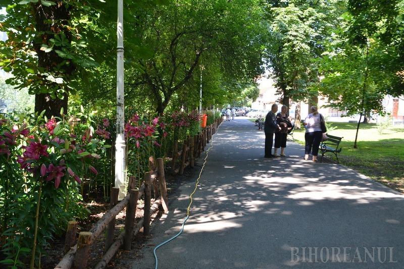 Marius florarul impresionează din nou. A umplut Parcul Libertăţii cu crini imperiali superbi (FOTO / VIDEO)