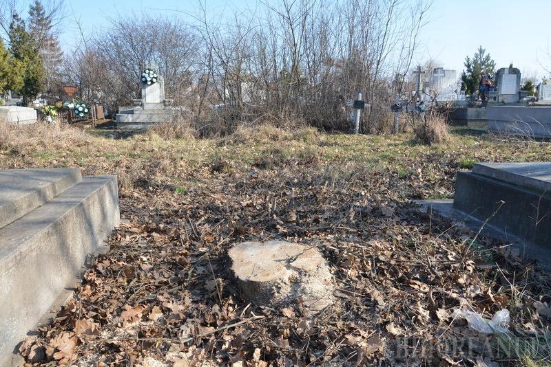 Defrişare ilegală! Garda de Mediu Bihor a sistat masacrul verde din cimitirul municipal (FOTO)