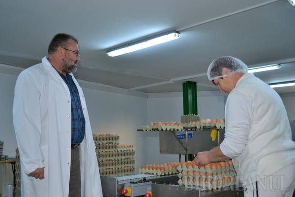 Ferma cu ouă de aur: Cea mai modernă fermă avicolă bihoreană e atât de computerizată încât un singur muncitor îngrijeşte 34.000 de găini (FOTO)