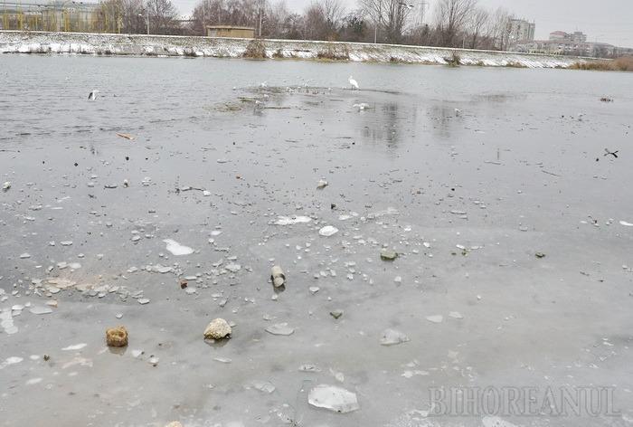 ABA Crişuri avertizează: Atenţie la gheaţa de pe râuri!