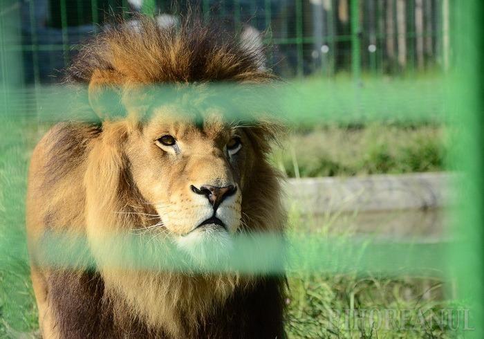 ADP Oradea anunţă noul program al Grădinii Zoologice