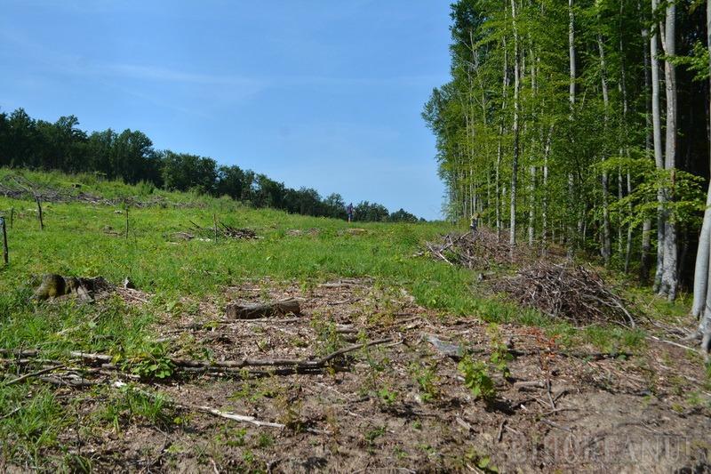 Haiducie cu voie de la Primărie: Primăriţa din Brusturi acoperă un furt de pădure în care e implicat propriul soţ (FOTO)