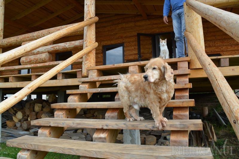 Grand Hotel Ham-ham: În Bihor s-a înfiinţat un hotel de lux pentru câini, cu camere dotate inclusiv cu canapele şi televizoare (FOTO)