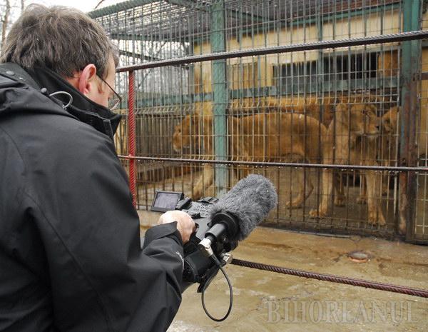 Jurnaliştii BBC, cu camerele pe leii orădeni (FOTO)