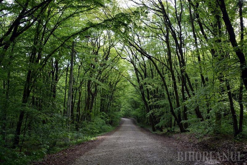 Luna plantării arborilor: Peste 110 hectare de terenuri vor fi împădurite de Direcţia Silvică Bihor