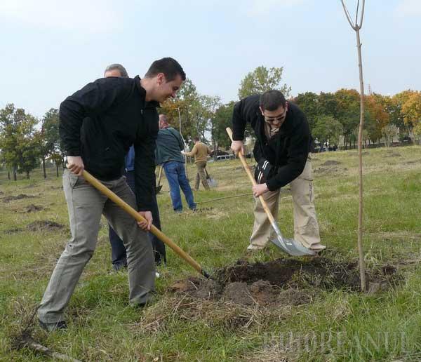 Municipalitatea va înlocui arborii plantaţi în toamnă care s-au uscat