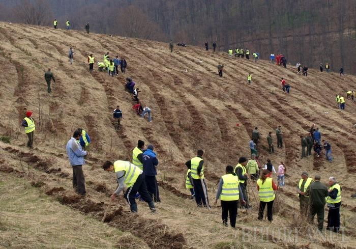 Direcţia Silvică Bihor a început curăţenia de primăvară şi plantările: peste 420 hectare de pădure vor fi regenerate în acest an