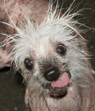 Rascal e Cel mai urât câine (VIDEO)