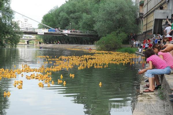 Mii de răţuşte, lansate pe Criş (FOTO)