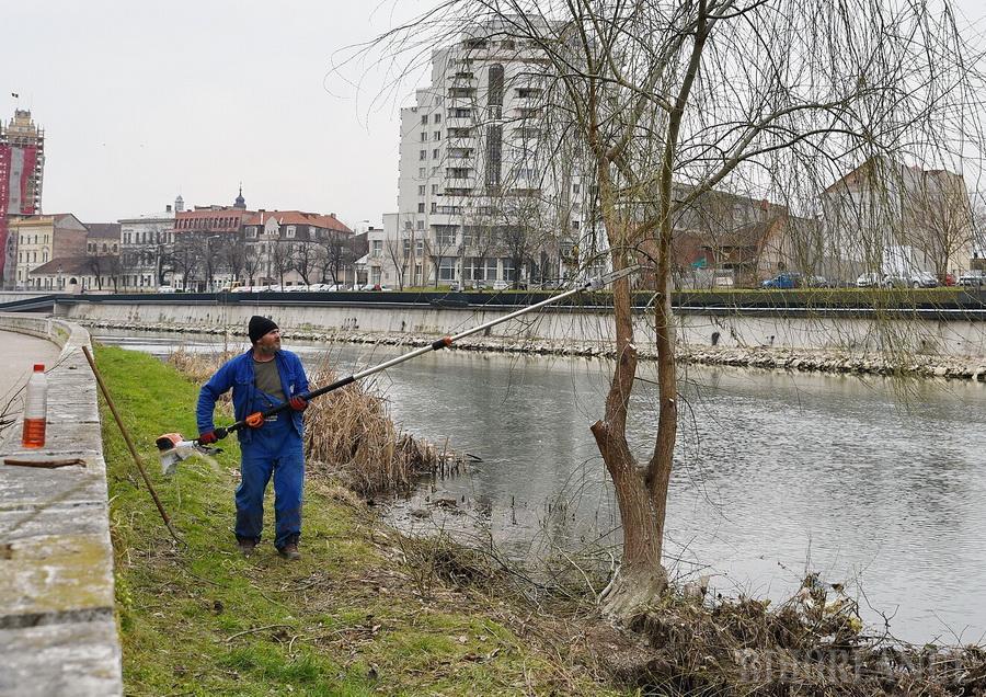 Primăria Oradea a sistat începând din aprilie tăierile de orice fel în coroana arborilor sănătoşi