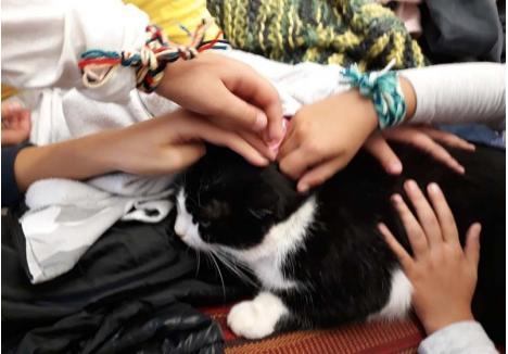 """MICI """"MESERIAŞA"""". Cel mai adesea, Mici poate fi întâlnită în atelierul de arte populare deţinut de meşterul Ida Pázmán, care îi învaţă pe copii să tricoteze ori să brodeze. Blândă, felina îi lasă pe toţi micuţii să o mângâie... (foto: Facebook / Mici-Pisica Cetatii)"""