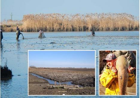 A FOST ODATĂ... Timp de peste o sută de ani, în lacurile de la Cefa a abundat peştele (stânga), aici fiind capturate chiar şi exemplare uriaşe, la care mulţi pescari doar visează. Fostele heleşteie sunt acum secate şi vor deveni culturi de porumb (dreapta)