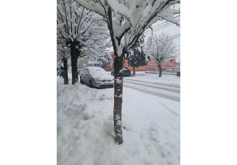 foto: Mădălin Hinț