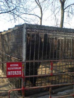 Grădina Zoologică se reclădeşte din temelii (FOTO)