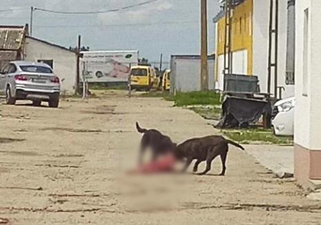 Scene de groază în Oradea: Doi câini au sfâşiat un alt căţel în plină stradă! (FOTO / VIDEO)