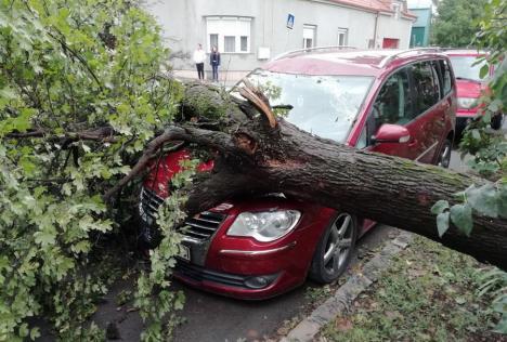 Copac prăbușit peste o mașină în Oradea (FOTO / VIDEO)