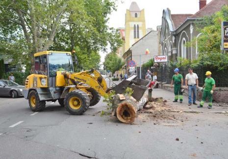 Tăieri fără plantări: Primăria Oradea nu-și respectă propriul regulament privind plantarea de noi arbori