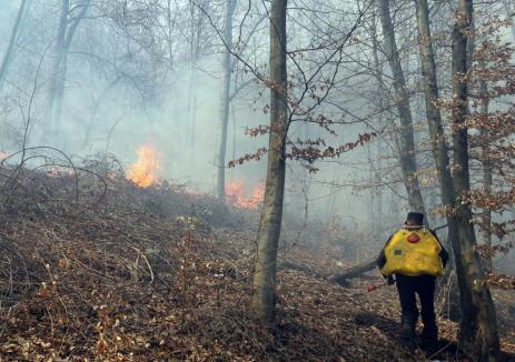 Pădurile din Bihor, în flăcări: incendii de litieră în mai multe sate din judeţ
