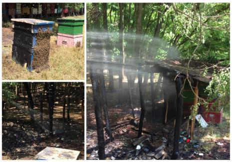 Incendiu provocat de... cioburi de sticlă, în Bihor! (FOTO)